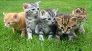 The cat adoption day will take place on Saturday 30 July from 10am to 4pm at the Lost Dogs Home in Cranbourne West.